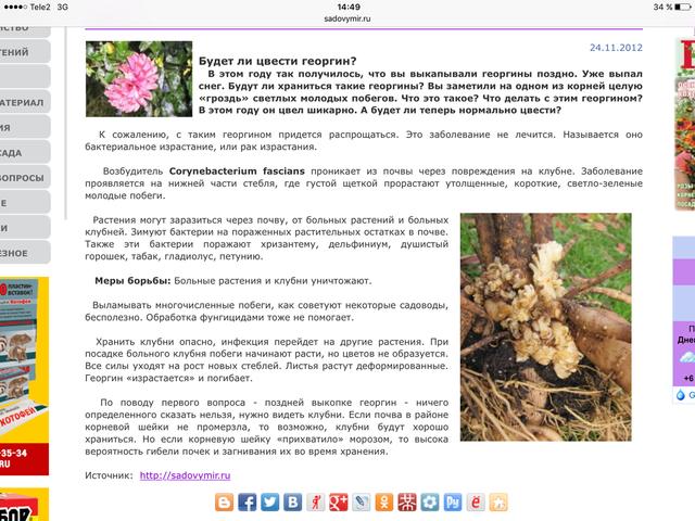 Георгины в цвету - Страница 35 18824907_m