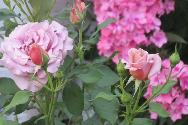 http://images.vfl.ru/ii/1507124745/d11af865/18856639_m.jpg
