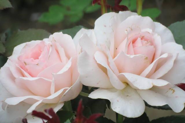 http://images.vfl.ru/ii/1507124746/d84c3e71/18856642_m.jpg