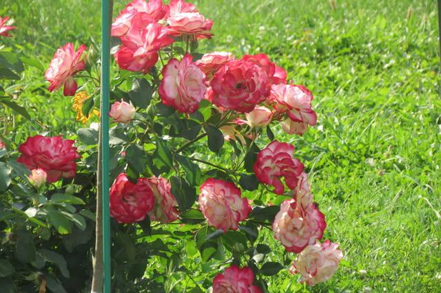 http://images.vfl.ru/ii/1507124747/f45a6131/18856644_m.jpg