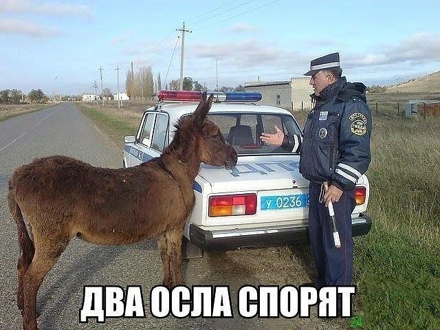 http://images.vfl.ru/ii/1507384630/afd39346/18901029.jpg