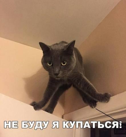 http://images.vfl.ru/ii/1507452143/20e214ae/18909786_m.jpg