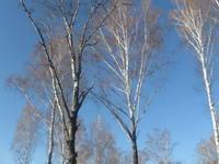 http://images.vfl.ru/ii/1507465254/1532aa11/18912723_s.jpg