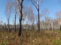 http://images.vfl.ru/ii/1507465278/ee3bb32c/18912727_s.jpg