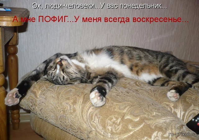 http://images.vfl.ru/ii/1507466663/be1cba27/18913052_m.jpg