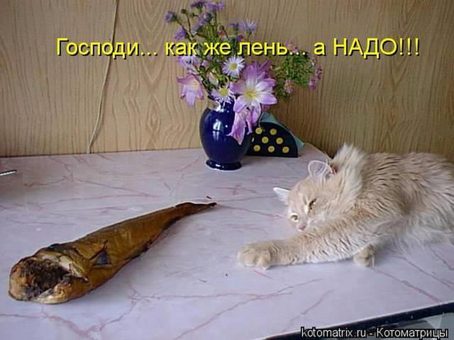 http://images.vfl.ru/ii/1507466700/389c8d19/18913072_m.jpg