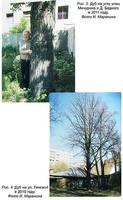http://images.vfl.ru/ii/1507991740/46a073ce/18998958_s.jpg