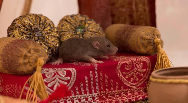 http://images.vfl.ru/ii/1508053159/910a0e84/19006700_m.jpg