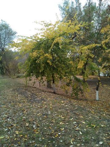 http://images.vfl.ru/ii/1508076106/239e3c6e/19010927_m.jpg