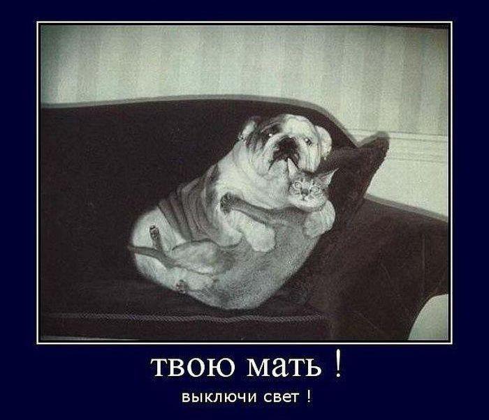 http://images.vfl.ru/ii/1508079892/a191f95e/19011516.jpg