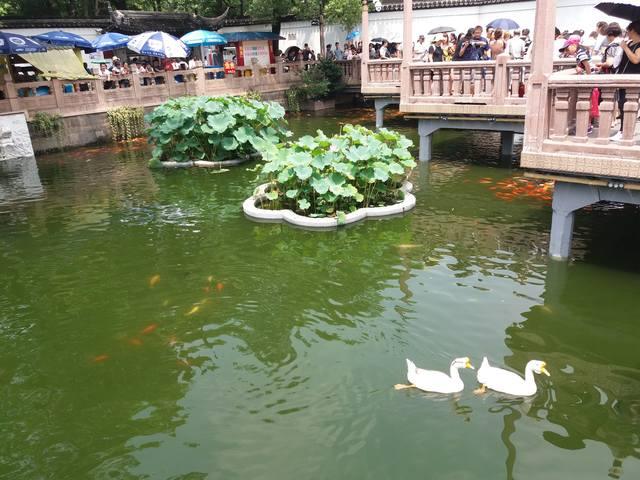 Грандиозный Шанхай моими глазами - Страница 6 19020479_m
