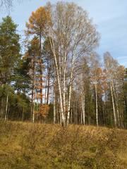 http://images.vfl.ru/ii/1508332220/59cb0406/19049258_m.jpg