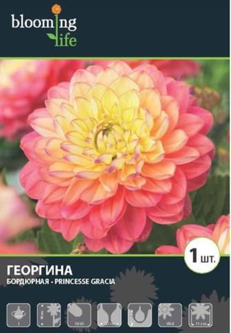Георгины в цвету - Страница 36 19056661_m