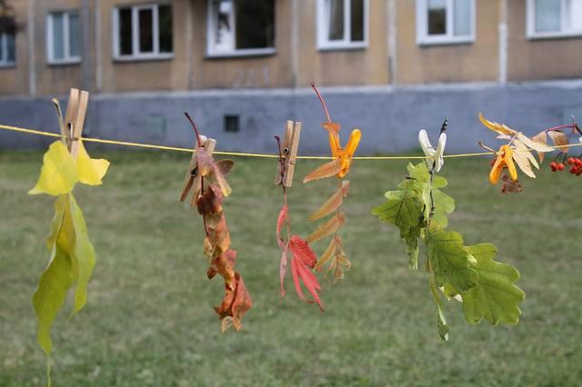 http://images.vfl.ru/ii/1508941438/16a39dd5/19143204_m.jpg