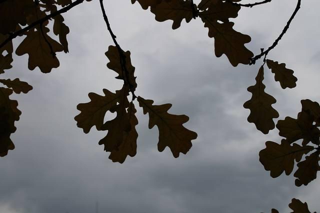 http://images.vfl.ru/ii/1508941438/5de8e2d2/19143202_m.jpg