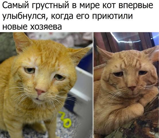 http://images.vfl.ru/ii/1509222033/eb77916b/19183999_m.jpg