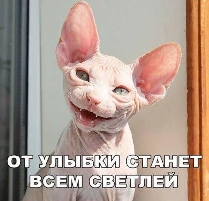 http://images.vfl.ru/ii/1509567608/24b45e33/19241048_m.jpg