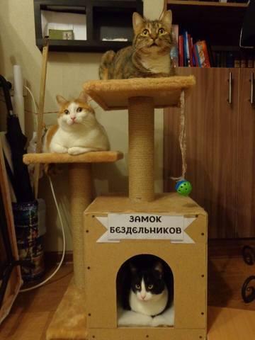 http://images.vfl.ru/ii/1510005719/8d15dccf/19312479_m.jpg