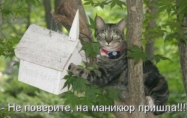 http://images.vfl.ru/ii/1510086272/afc298c4/19325393_m.jpg
