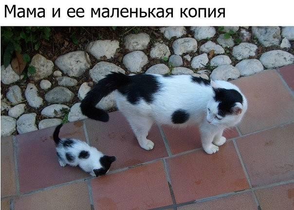 http://images.vfl.ru/ii/1510086321/e40b27ce/19325412_m.jpg