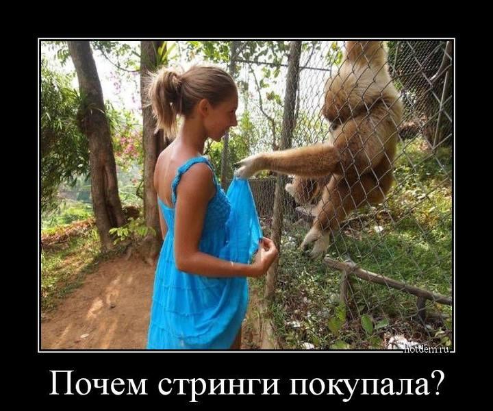 http://images.vfl.ru/ii/1510631894/d4d92501/19410314.jpg