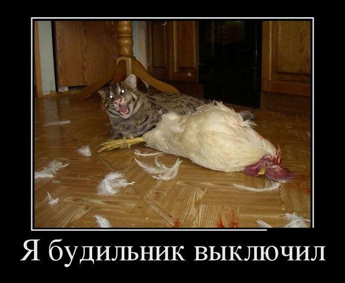 http://images.vfl.ru/ii/1510891596/e0de5356/19453737.jpg