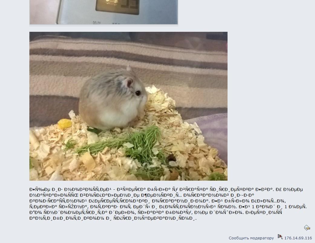http://images.vfl.ru/ii/1510914617/83fe096a/19457369.jpg