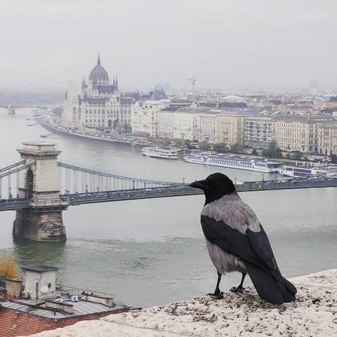http://images.vfl.ru/ii/1511012172/673088d7/19472103_m.jpg