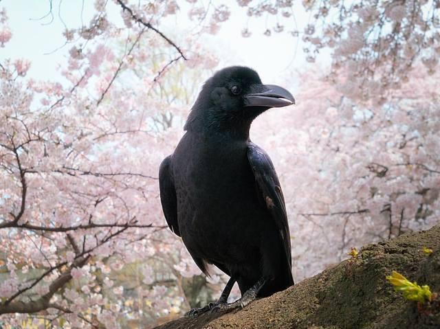 http://images.vfl.ru/ii/1511014265/197aae7d/19472656_m.jpg