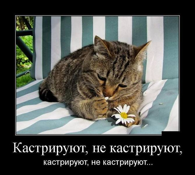 http://images.vfl.ru/ii/1511237615/ebbf6b19/19506000.jpg