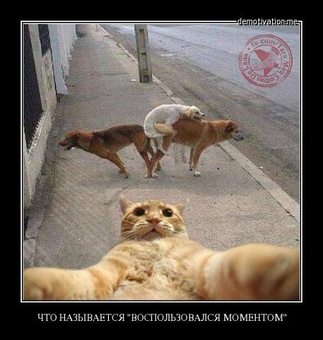 http://images.vfl.ru/ii/1511300114/f4bbe755/19518463.jpg