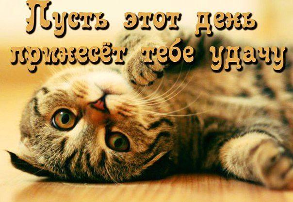 http://images.vfl.ru/ii/1511641906/c216dadf/19569030_m.jpg