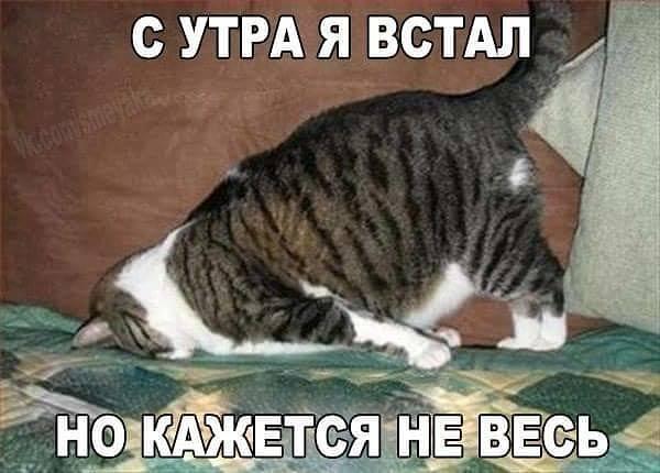 http://images.vfl.ru/ii/1511726399/c215d89e/19580755_m.jpg