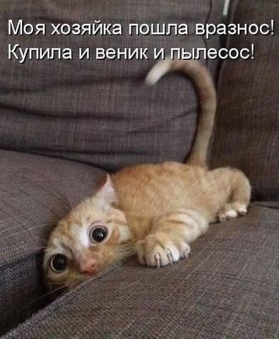 http://images.vfl.ru/ii/1511820456/a4fb1140/19597004_m.jpg