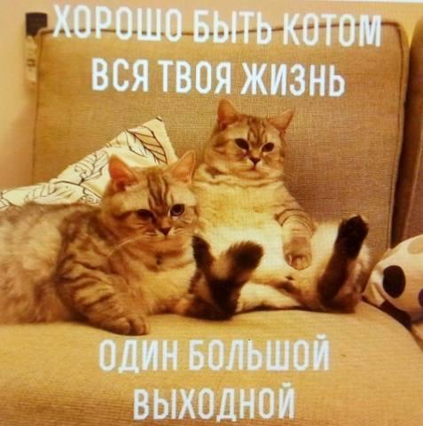http://images.vfl.ru/ii/1512057959/2788c15b/19633102_m.jpg