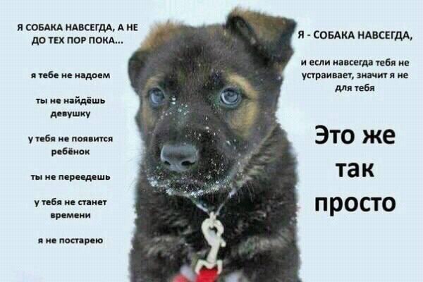 http://images.vfl.ru/ii/1512588833/0625c7a7/19712758_m.jpg