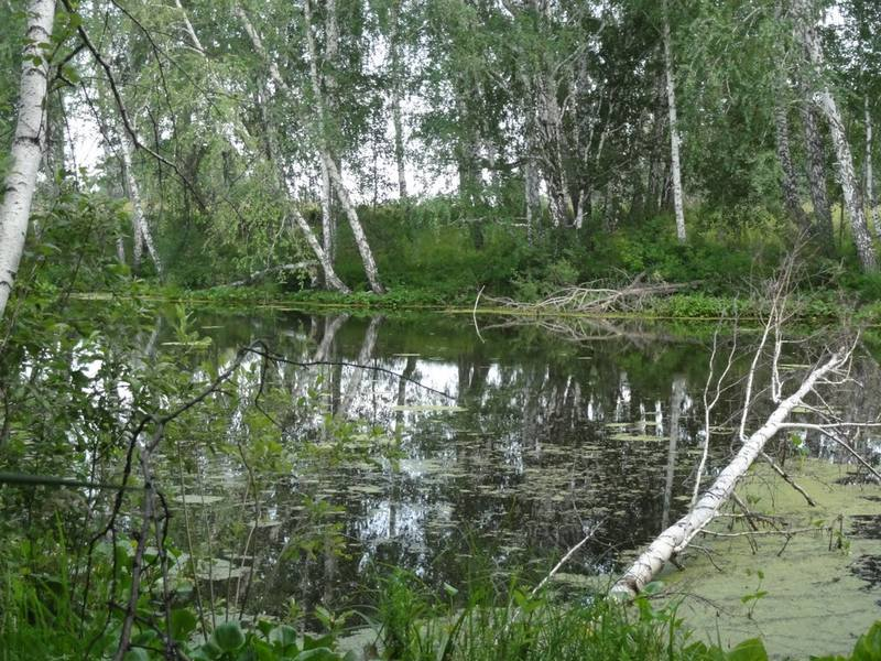 http://images.vfl.ru/ii/1512816676/706fc30d/19744387_m.jpg