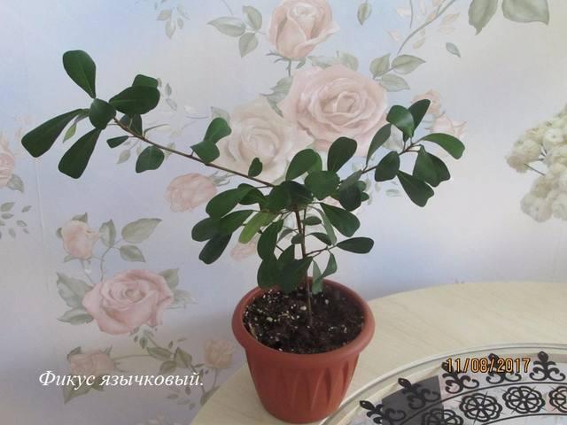 http://images.vfl.ru/ii/1512820740/85bddcb5/19745129_m.jpg