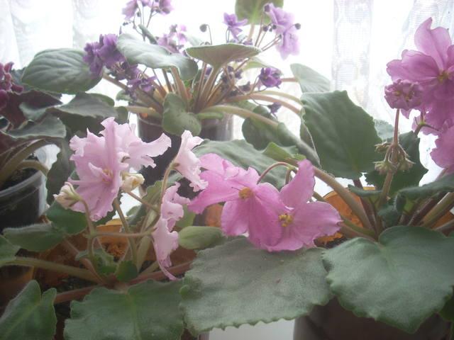 http://images.vfl.ru/ii/1512988033/8073035d/19767288_m.jpg