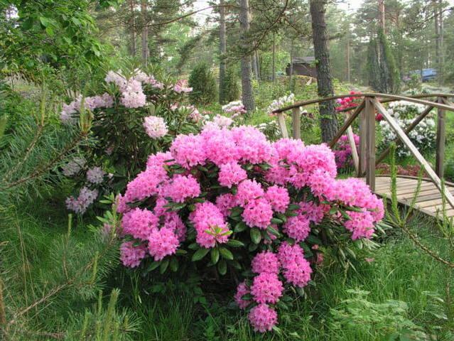 http://images.vfl.ru/ii/1513002655/414df2ac/19769623_m.jpg