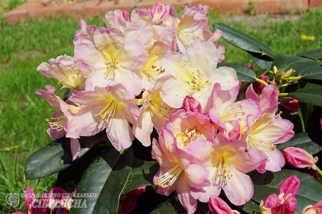 http://images.vfl.ru/ii/1513002828/3241b701/19769643_m.jpg