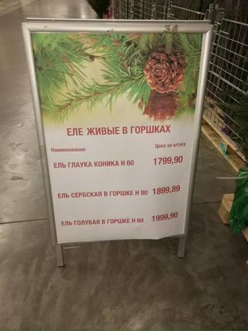 http://images.vfl.ru/ii/1514046726/a1eeec89/19894842_m.jpg