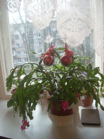 http://images.vfl.ru/ii/1514805839/ff5b05a3/19982100_m.jpg