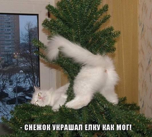 http://images.vfl.ru/ii/1514902222/d0b95701/19992849_m.jpg