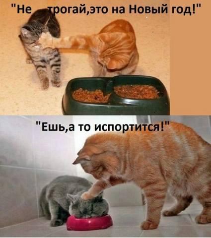 http://images.vfl.ru/ii/1515061209/122ddac8/20012868_m.jpg