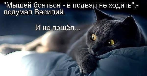 http://images.vfl.ru/ii/1515516157/2faba3f4/20077722_m.jpg