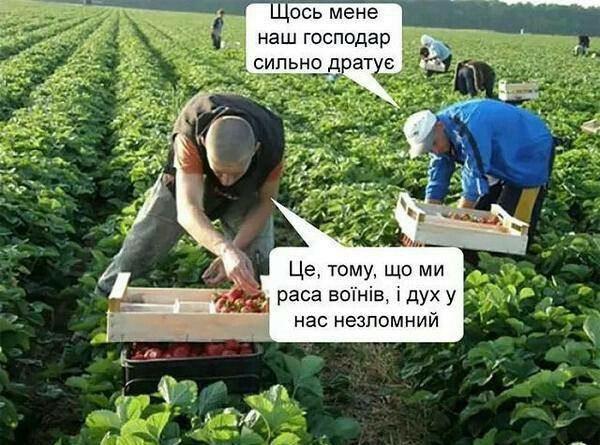 http://images.vfl.ru/ii/1515607774/5a6bc120/20092473.jpg