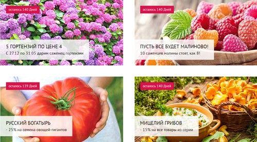 Промокод Беккер. Упаковка семян огурцов в подарок + бесплатная доставка