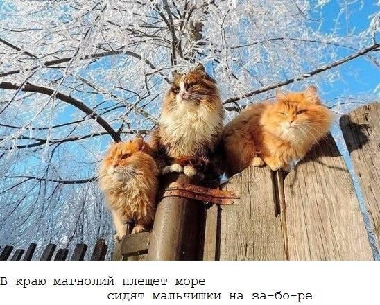 http://images.vfl.ru/ii/1515854973/c0e3abcc/20134526_m.jpg