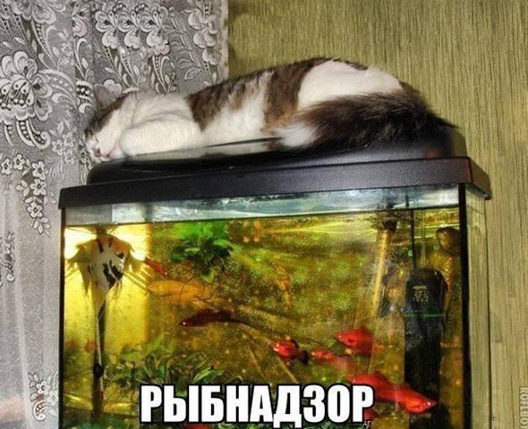 http://images.vfl.ru/ii/1515945634/8e0b9486/20147532_m.jpg